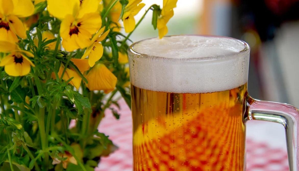 pivo u květin